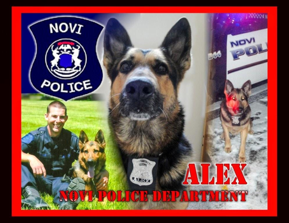 AMVETS War Dog Collage ALEX 061014-6.jpg